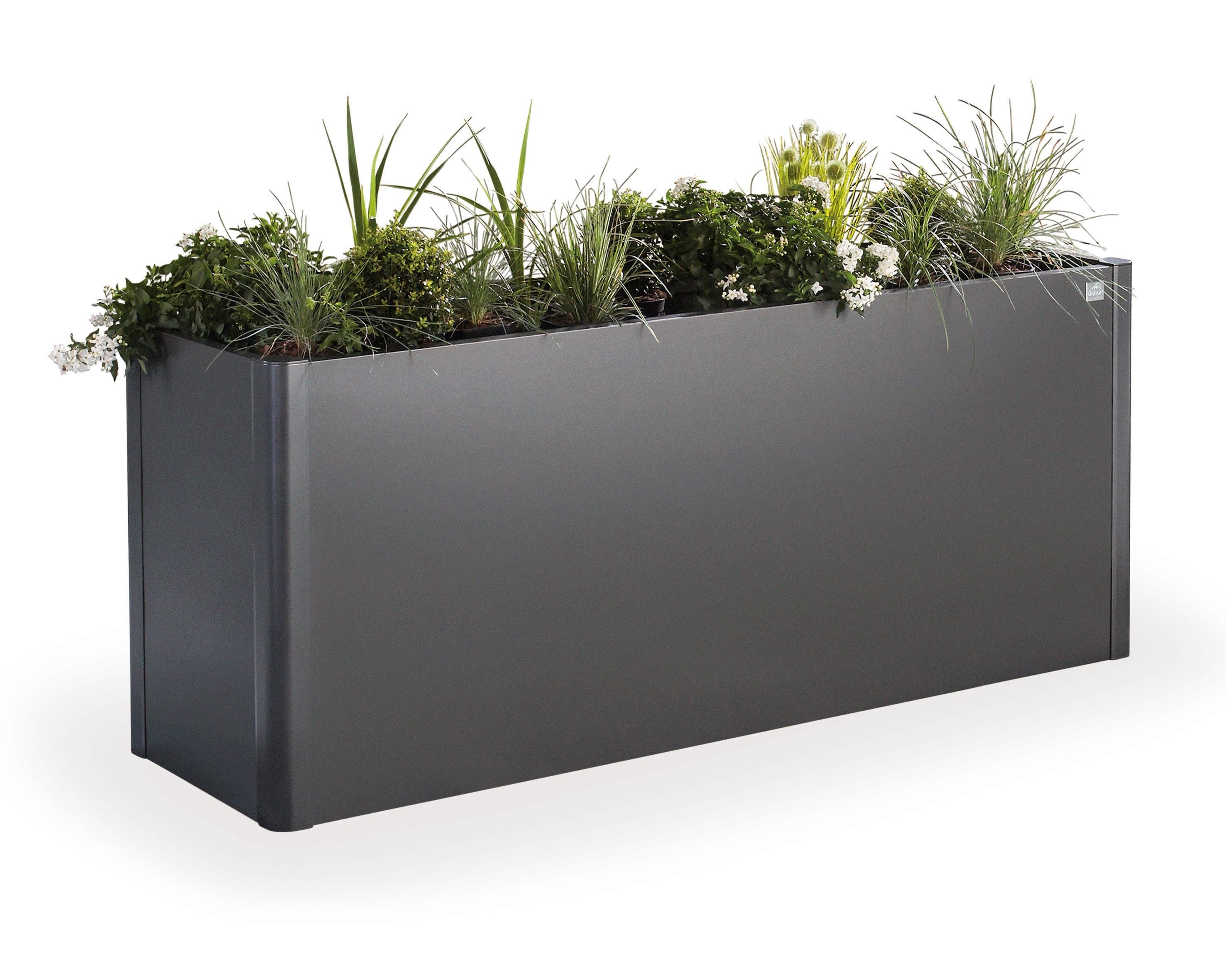 Plante Robuste Pour Terrasse bac à plantes belvedere